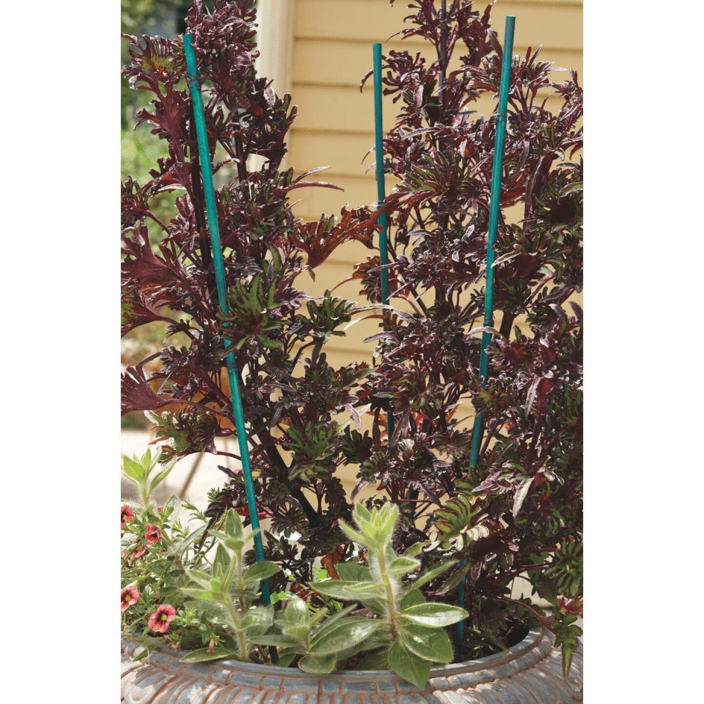 Bond 5 Ft. Green Bamboo Plant Stakes (6-Pack) Image 4