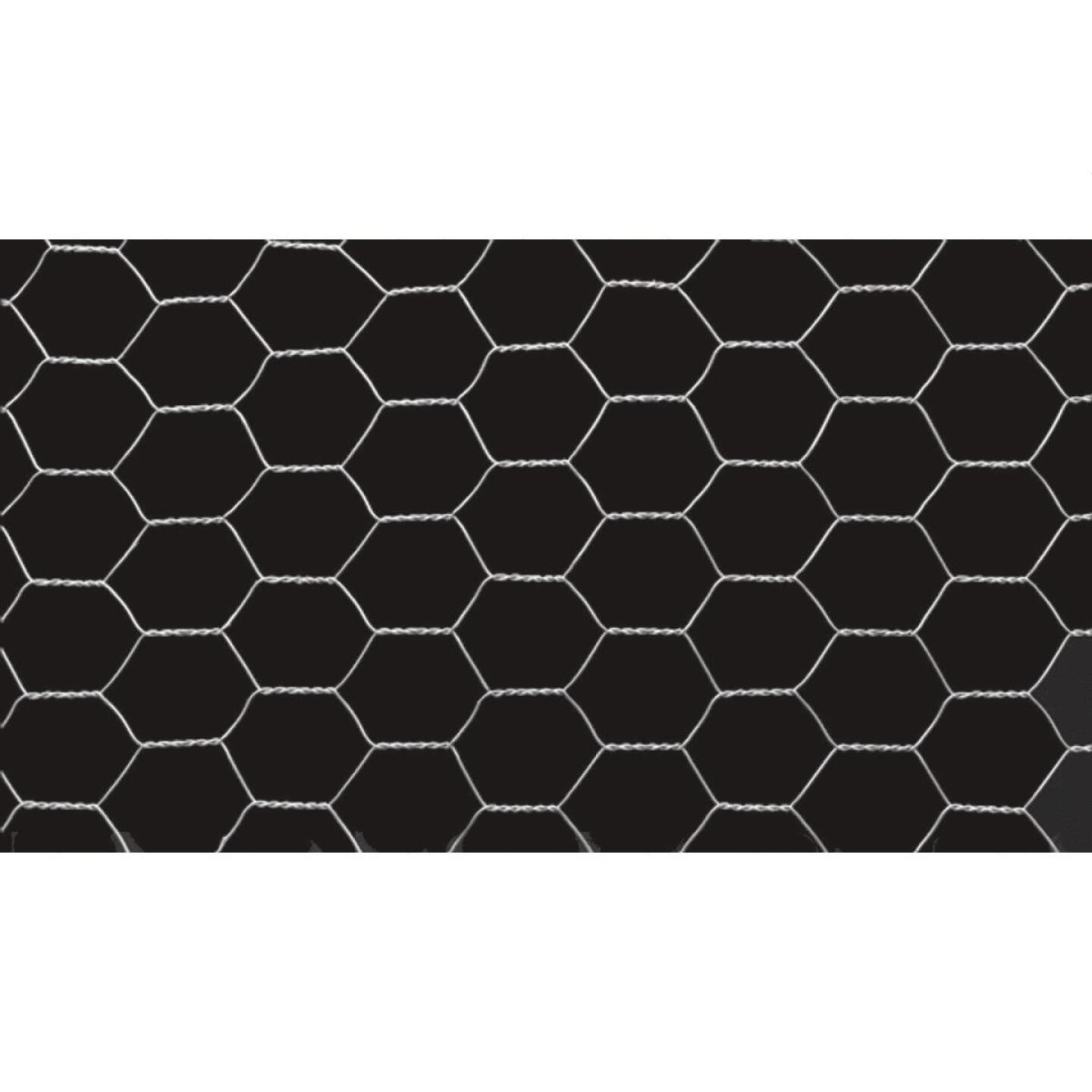 1 In. x 60 In. H. x 50 Ft. L. Hexagonal Wire Poultry Netting Image 3